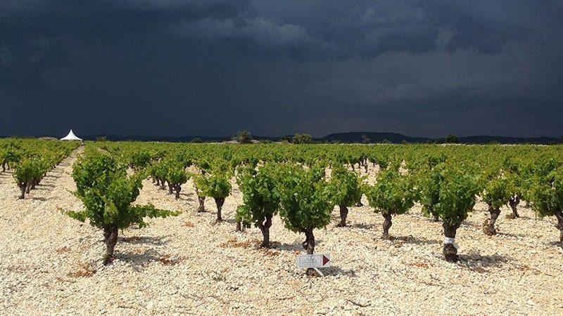vignes-barroubio